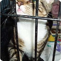 Adopt A Pet :: Millie - Westfield, MA
