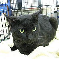 Adopt A Pet :: Rascal Roan - Vero Beach, FL
