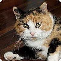 Adopt A Pet :: Clover - Xenia, OH
