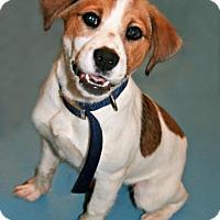 Adopt A Pet :: Petunia - Lufkin, TX