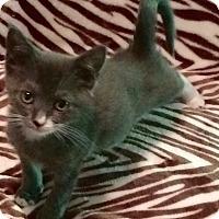 Adopt A Pet :: Mercedes - Colmar, PA