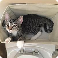 Adopt A Pet :: Coccolinetto (CP) - Woodbury, NJ