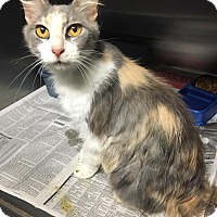 Adopt A Pet :: Laurel - Chattanooga, TN