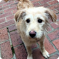 Adopt A Pet :: Sandy - Atlanta, GA