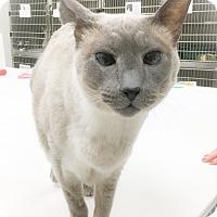 Adopt A Pet :: Xian - Webster, MA