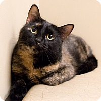 Adopt A Pet :: Adeline - Chicago, IL