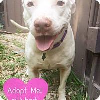 Adopt A Pet :: Hubert - Hartford, CT