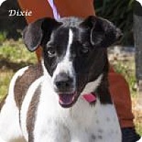 Feist Mix Dog for adoption in Madisonville, Tennessee - Dixie