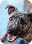 Terrier (Unknown Type, Medium) Mix Dog for adoption in Tinton Falls, New Jersey - Abella