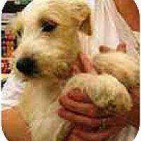 Adopt A Pet :: Mandy in Houston - Houston, TX