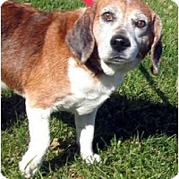 Adopt A Pet :: J.B. - Indianapolis, IN