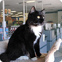 Adopt A Pet :: Manny - Palmdale, CA