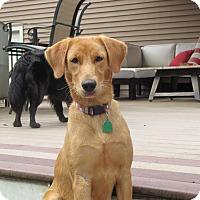 Adopt A Pet :: Daphne - New Canaan, CT
