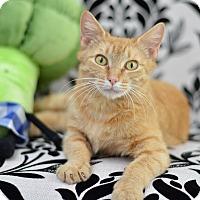 Adopt A Pet :: Gouda - St. Louis, MO