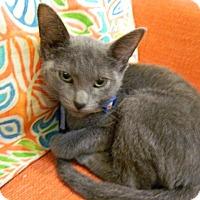 Adopt A Pet :: Gandalf - The Colony, TX