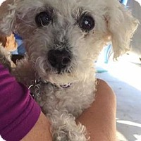 Adopt A Pet :: Juliet - Las Vegas, NV