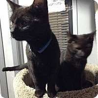 Adopt A Pet :: Bubba - Lorain, OH