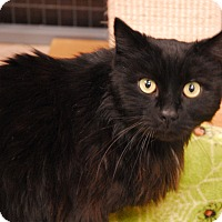 Adopt A Pet :: Sir Edward - Winchendon, MA