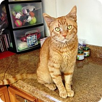 Adopt A Pet :: Tigger - Orange, CA