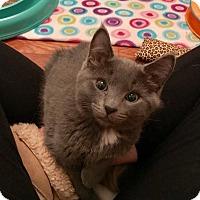 Adopt A Pet :: Kevin - New  York City, NY