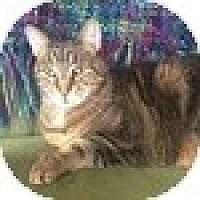 Adopt A Pet :: Charles - Vancouver, BC