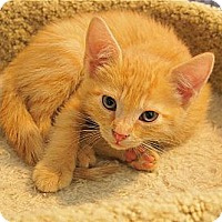 Adopt A Pet :: Zena - Victor, NY