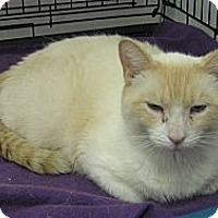 Adopt A Pet :: Pearl - london, ON