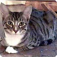 Adopt A Pet :: Victor - Portland, OR