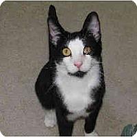 Adopt A Pet :: Maxwell - San Ramon, CA
