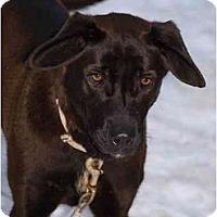 Adopt A Pet :: Mocha - Toronto/Etobicoke/GTA, ON