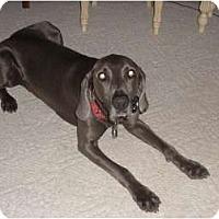 Adopt A Pet :: Arby - Attica, NY