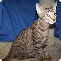 Adopt A Pet :: K-Carla3-Greg - Colorado Springs, CO