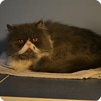 Adopt A Pet :: Danny Boy/peanut - Oyster Bay, NY