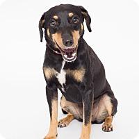 Adopt A Pet :: Jenny - Jupiter, FL