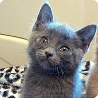 Adopt A Pet :: Cooter - Davis, CA