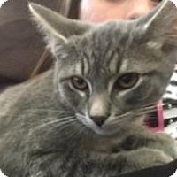 Adopt A Pet :: Hunter - McHenry, IL