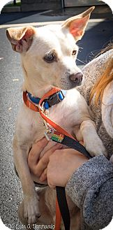 Terrier (Unknown Type, Small) Mix Dog for adoption in Loudonville, New York - Buddy