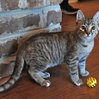 Adopt A Pet :: Annie - Savannah, GA