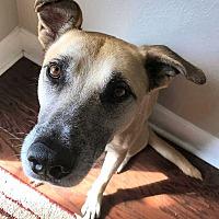 Adopt A Pet :: Rufus - Jacksonville, FL