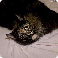 Adopt A Pet :: Carmella - Medina, OH