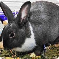 Adopt A Pet :: THUMPER - Louisville, KY