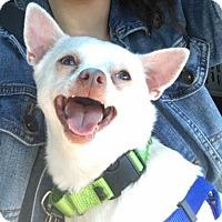 Adopt A Pet :: Juanito - Fort Lauderdale, FL