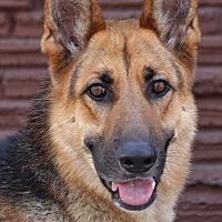 Adopt A Pet :: Benji von Bakers - Los Angeles, CA