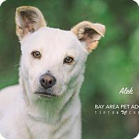 Adopt A Pet :: Alek - San Leon, TX