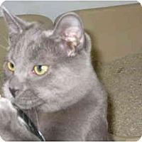Adopt A Pet :: Brady - Deerfield Beach, FL