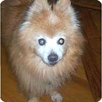 Adopt A Pet :: Pops - Houston, TX