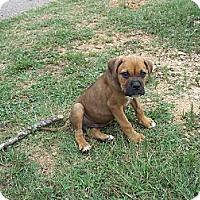 Adopt A Pet :: Beck - Adamsville, TN