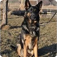 Adopt A Pet :: Adonis-Doni - Hamilton, MT