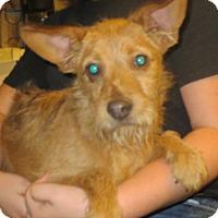 Adopt A Pet :: Jack Smith - Greenville, RI