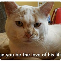 Adopt A Pet :: PATCHES - Ridgewood, NY